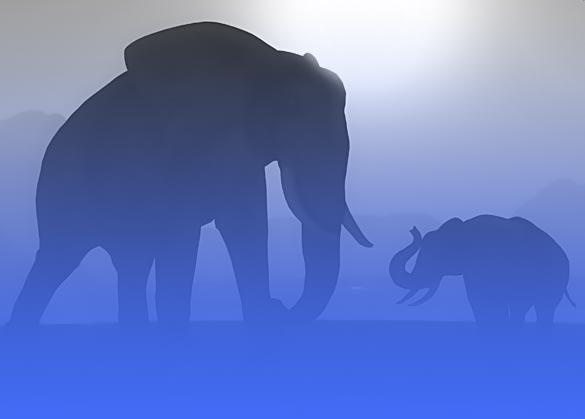 Pola asuh elephant mom